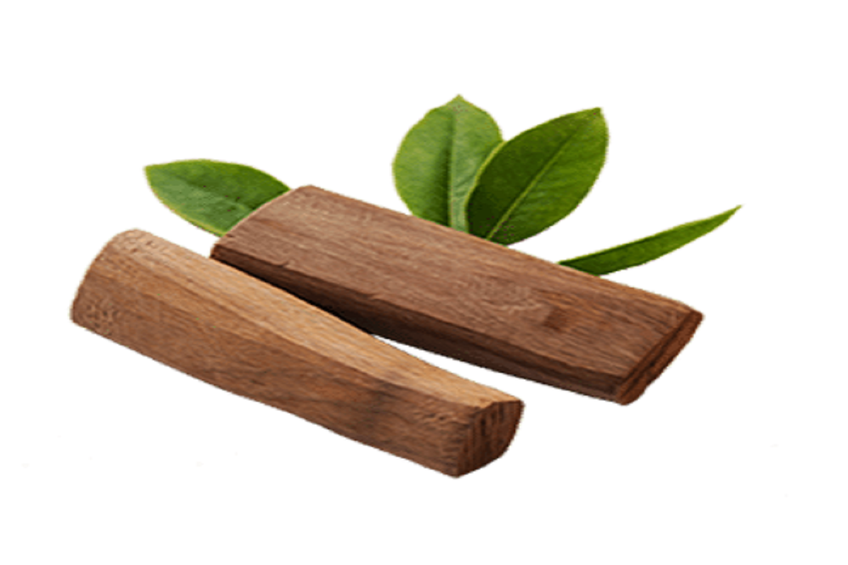 How to grow sandalwood? Learn in 3 hours -