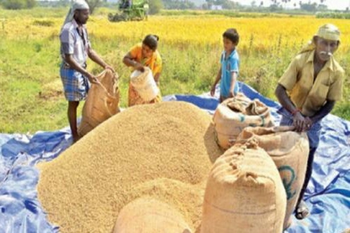 Ways to store Harvested grains safely