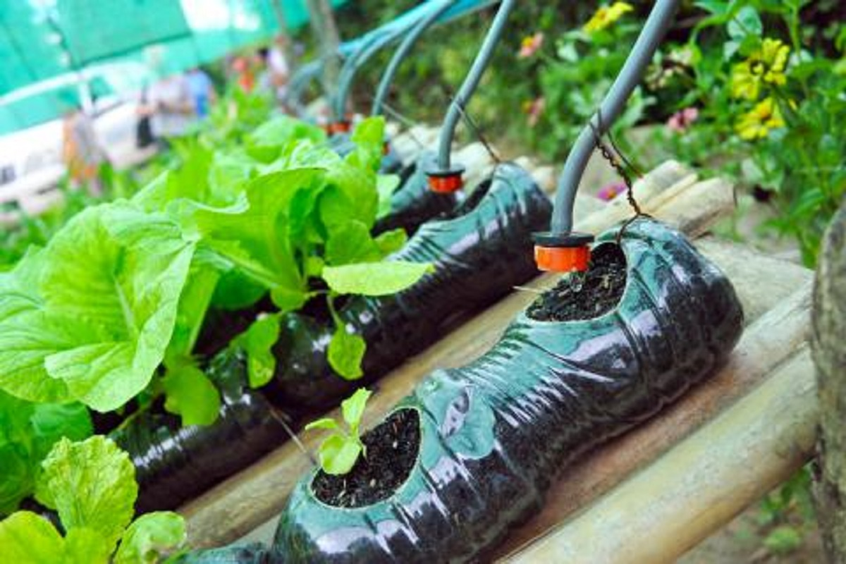 100% subsidy to set up drip irrigation