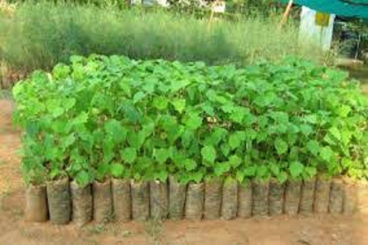 1.26 lakh saplings project in 2 days across Tamil Nadu
