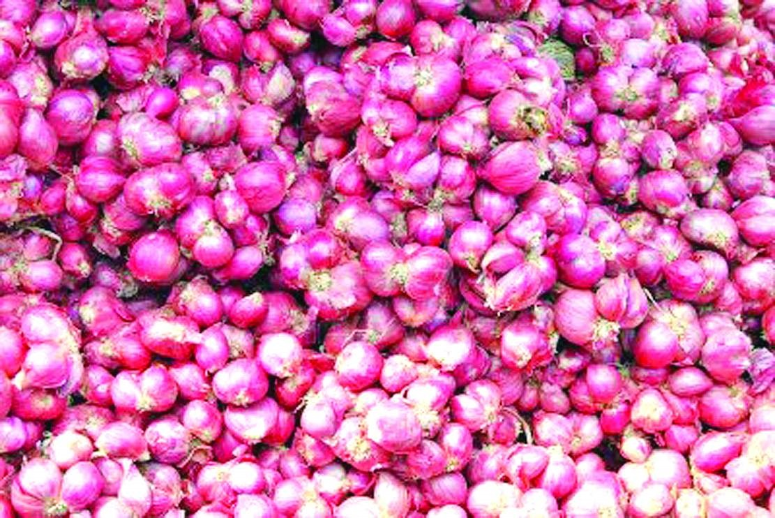 Small onion price forecast- Tamil Nadu Agricultural University Prediction!