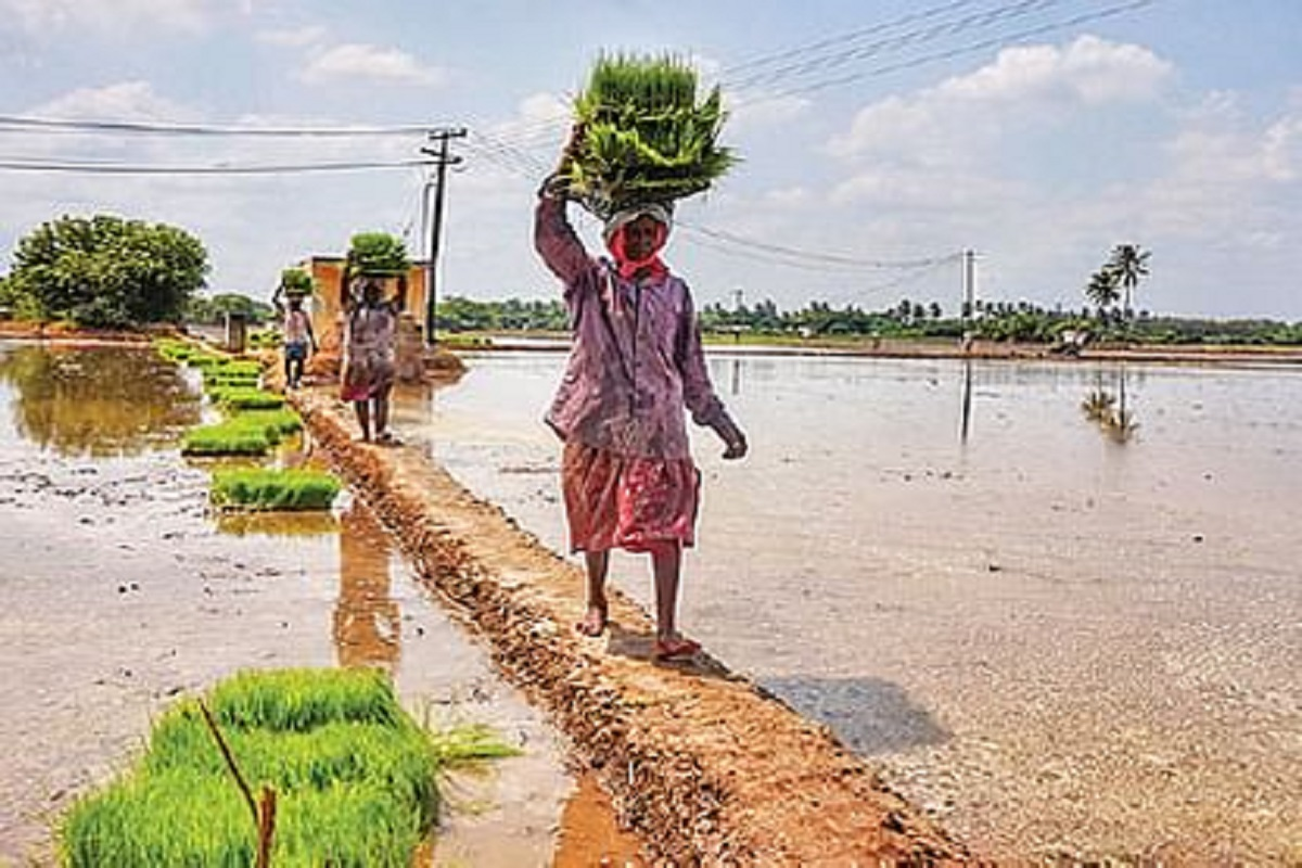 42 lakh farmers do not get PM's Kisan fund - How to get it?