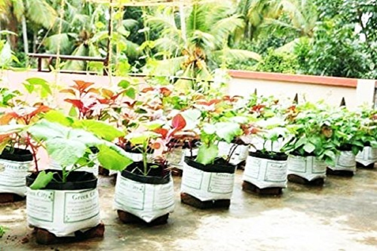 Simple tricks to get high yield in home garden