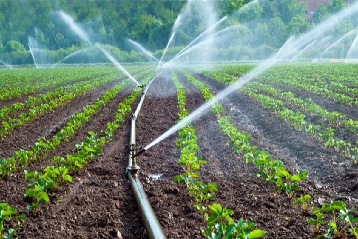 50 percent subsidy to set up micro-irrigation - Government of Tamil Nadu's massive project!