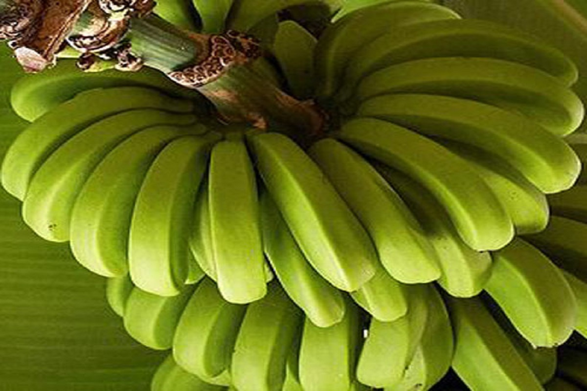 Banana prices will remain stable this year as usual - TNAU's forecast!