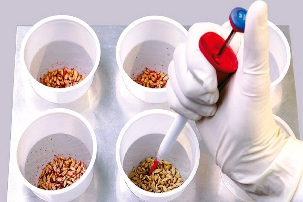 Seed purification is essential to increase germination-Agricultural Science Center Information!