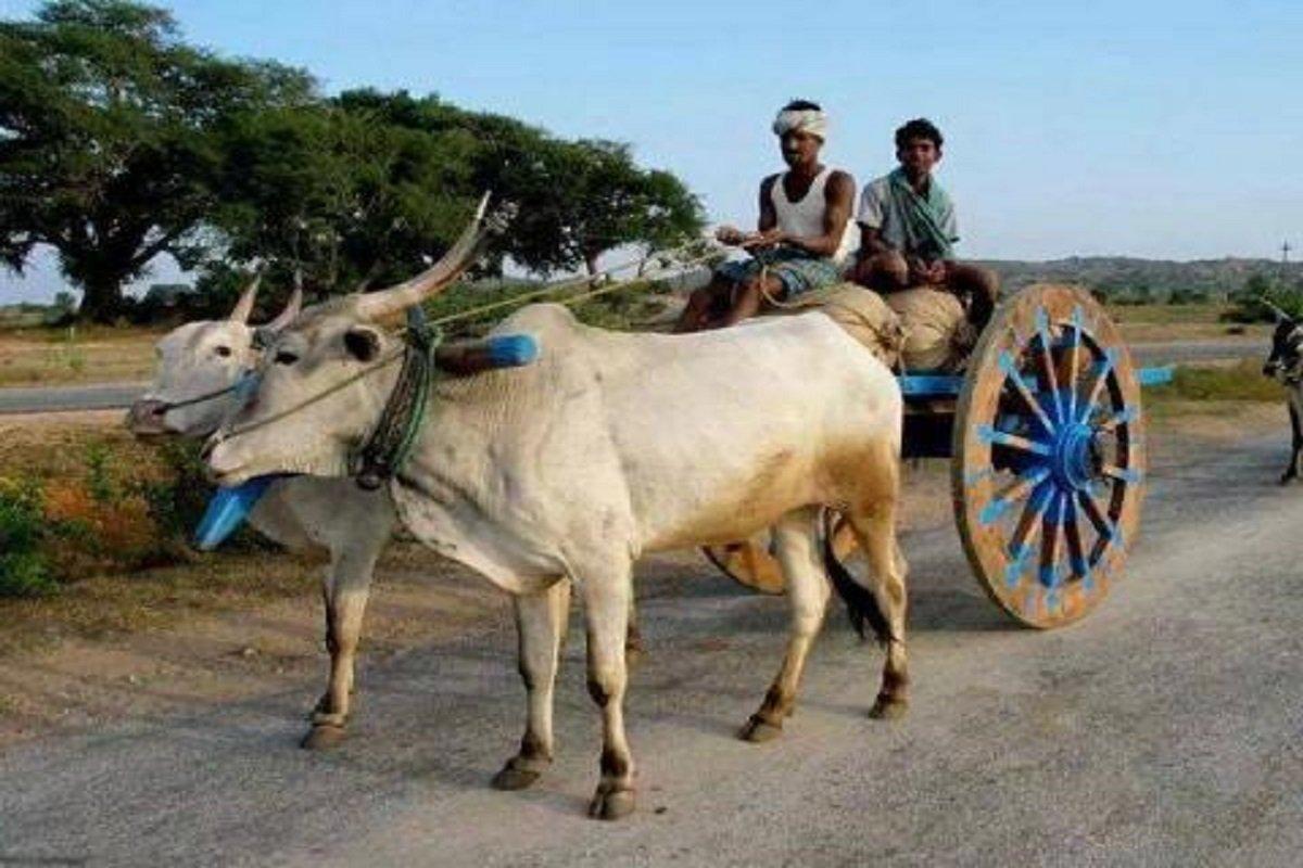 How to tame bulls? New tactics!