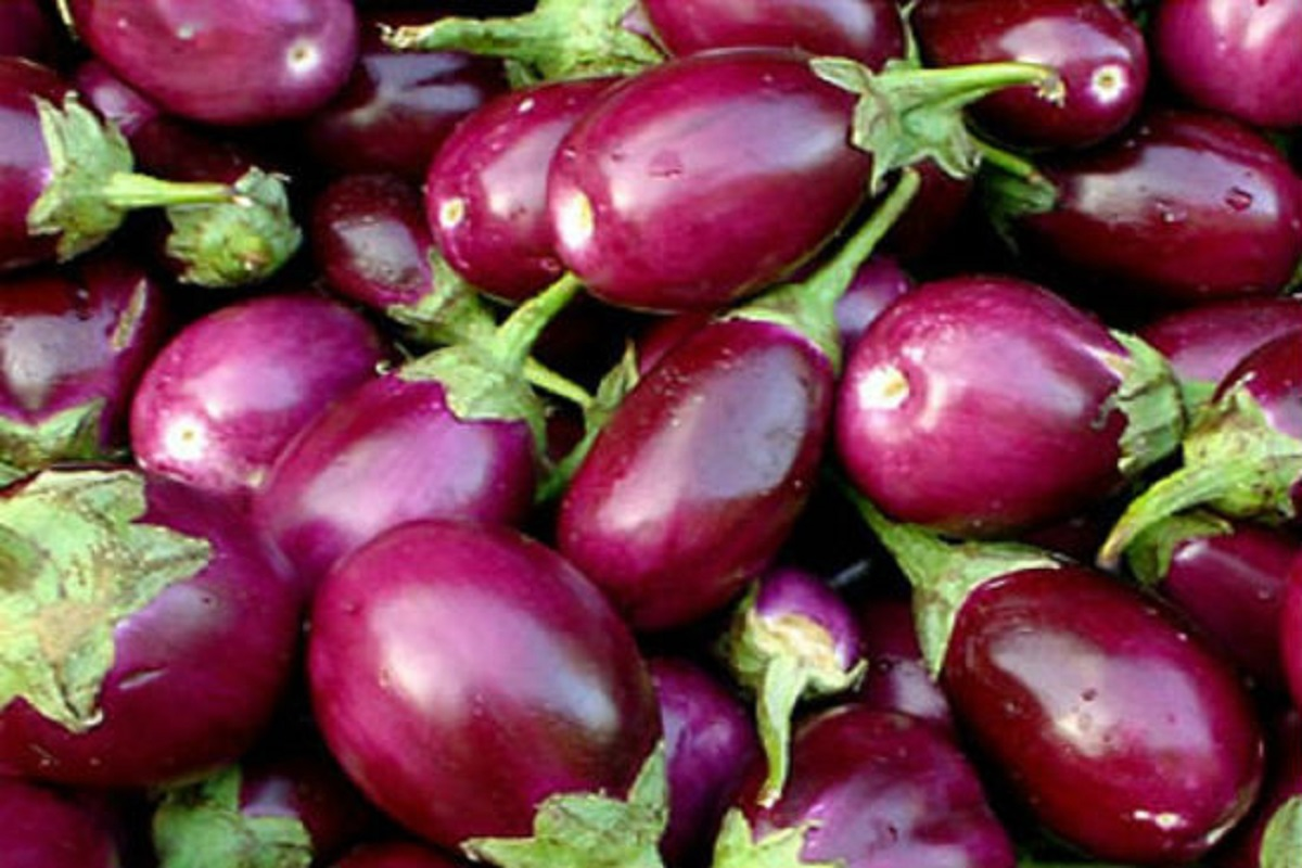 For farmers who cultivate eggplant naturally, Rs. 3750 Grant!