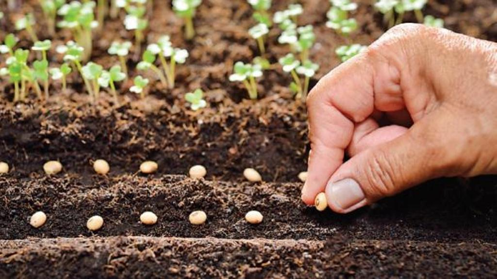 Export opportunity for states implementing one crop scheme per district is guaranteed