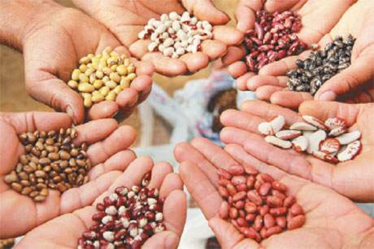 Subsidy for Vegetable Seed Production- Call for 2 District Farmers
