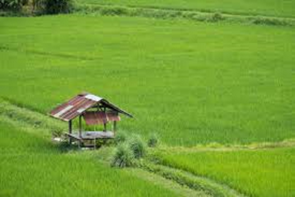 60,000 landowners apply for royalty for paddy cultivation from November 1!