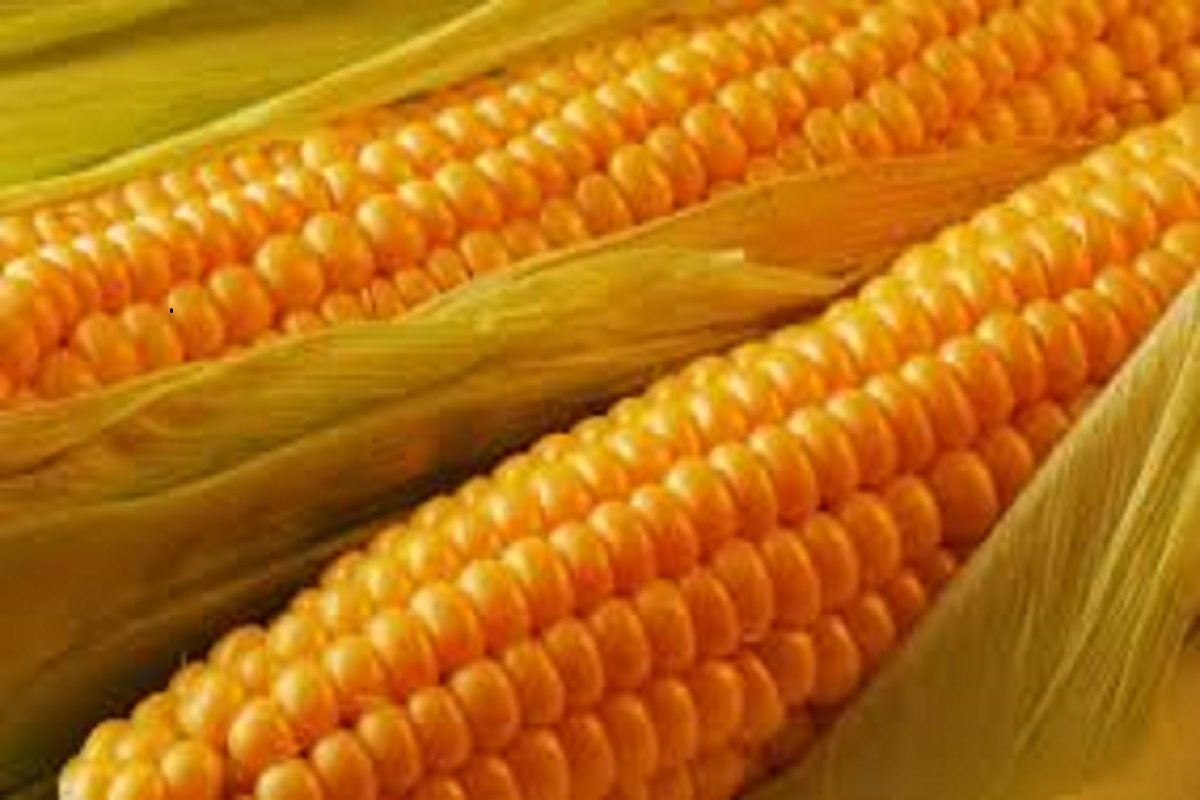 What price will be available for corn this year? Prediction of TNAU