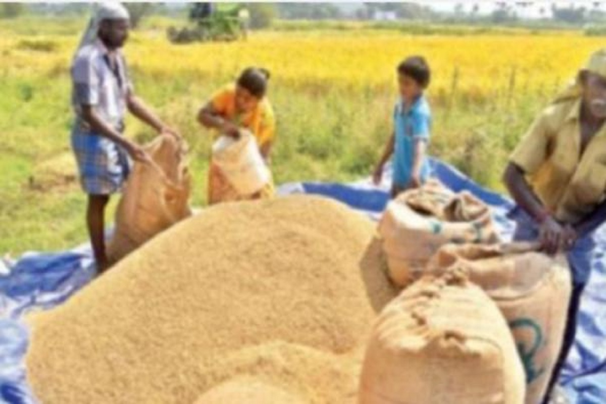 Central government's paddy procurement reaches 200 lakh tonnes!