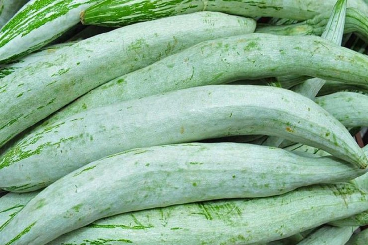 Incentives up to Rs. 5000 per hectare for vegetable cultivation - Call to farmers!
