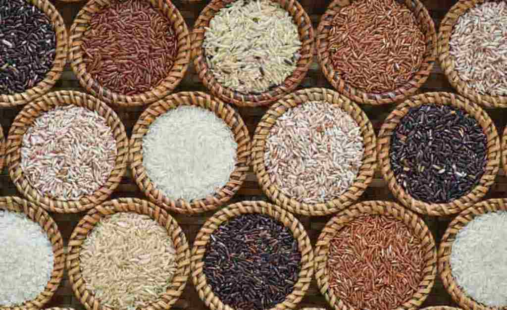 Paddy seeds at subsidy rate
