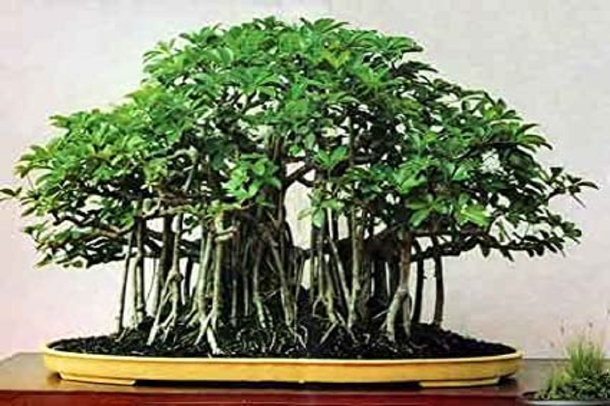 Bonsai Cultivation - Earn up to Rs 3 lakh!