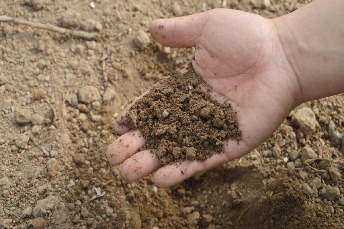 Reclaim The Soil
