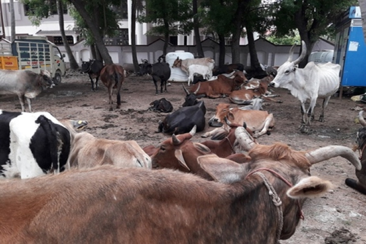 Relief Money to cows
