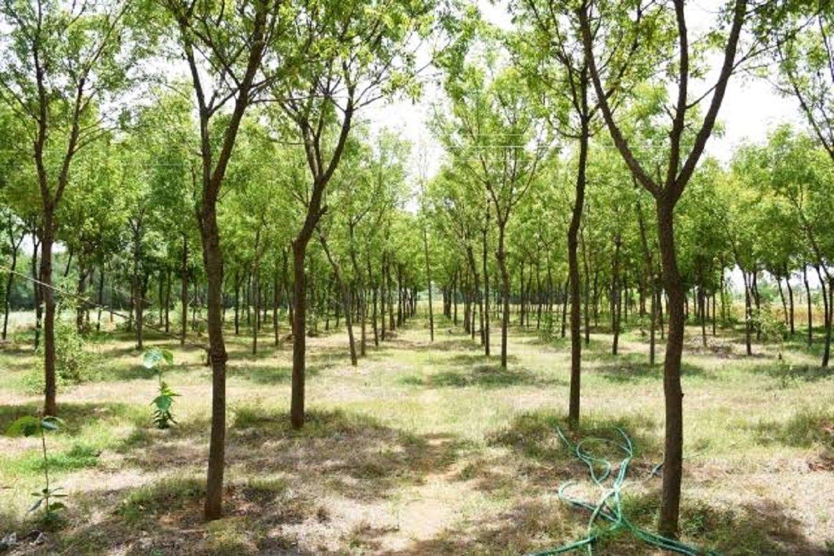 Short forest