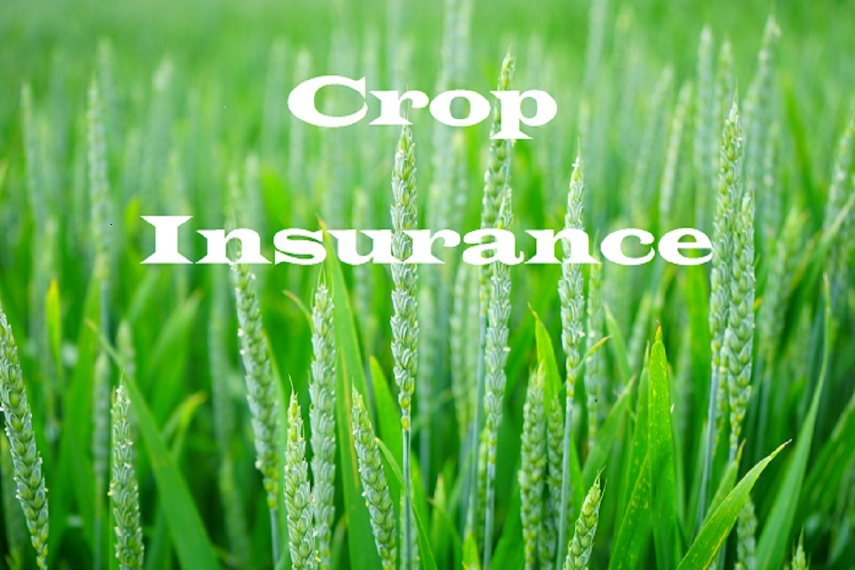 Opportunity to insure paddy again- Deadline extended to Dec. 15!