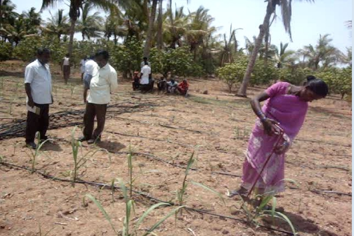 A way to reduce the cost of sugarcane cultivation by 50 percent - a tool to help cut the mother seed!