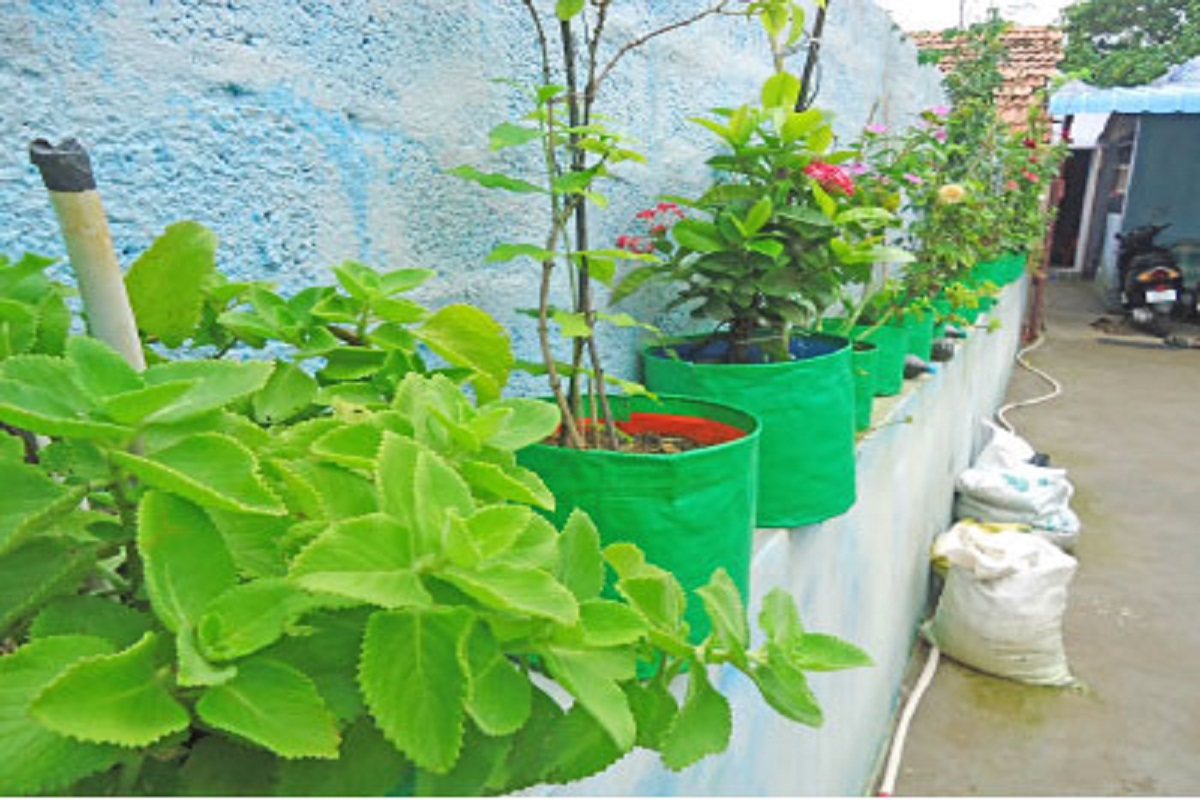 Want to set up a home garden? Horticulture sells fertilizers at subsidized prices!
