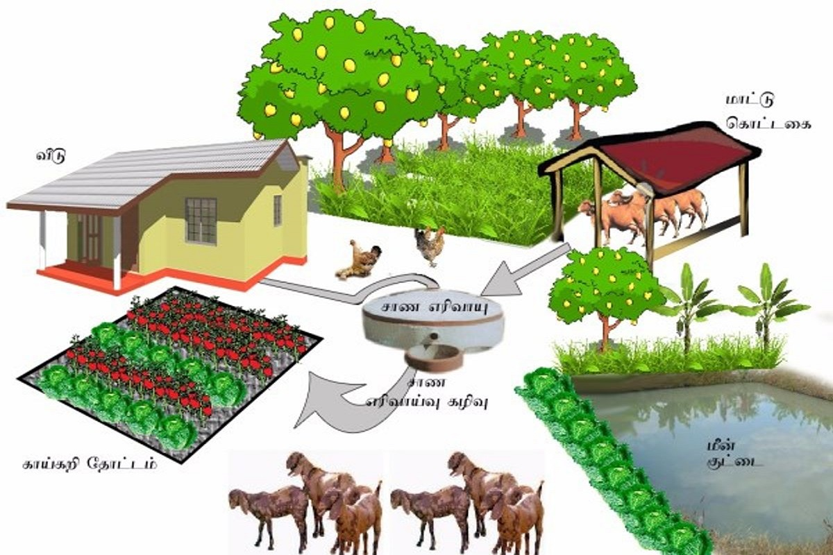 An integrated farm that provides income to farmers throughout the year!