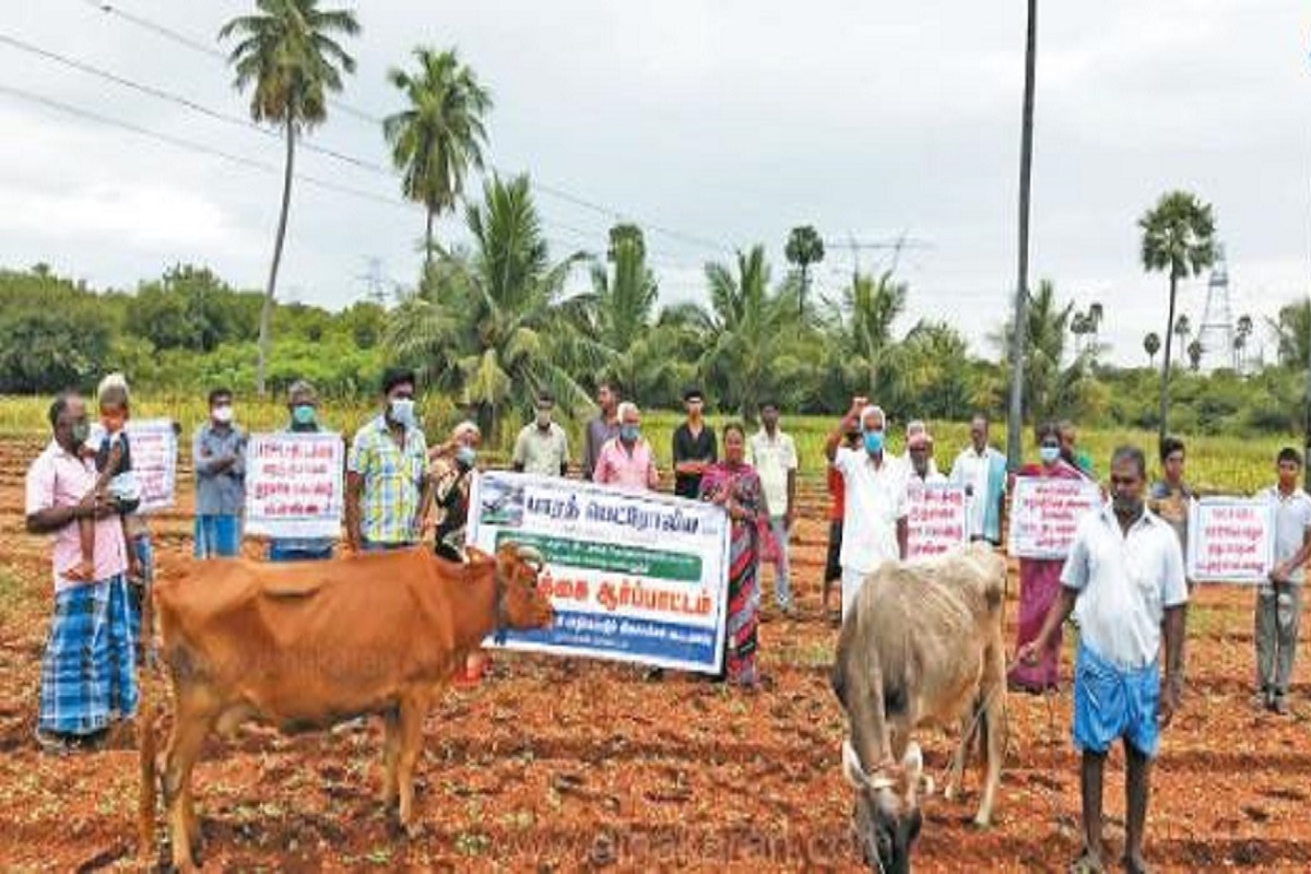 Farmers protest with livestock