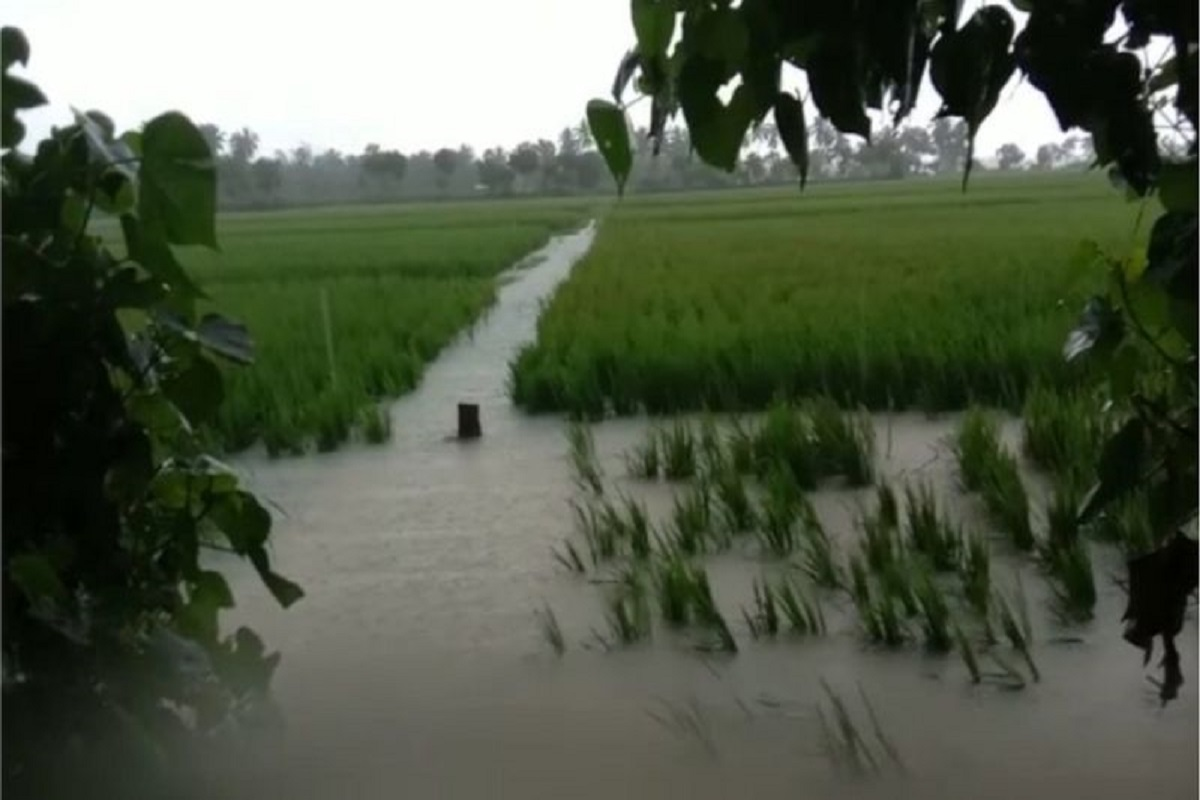 Crops in water