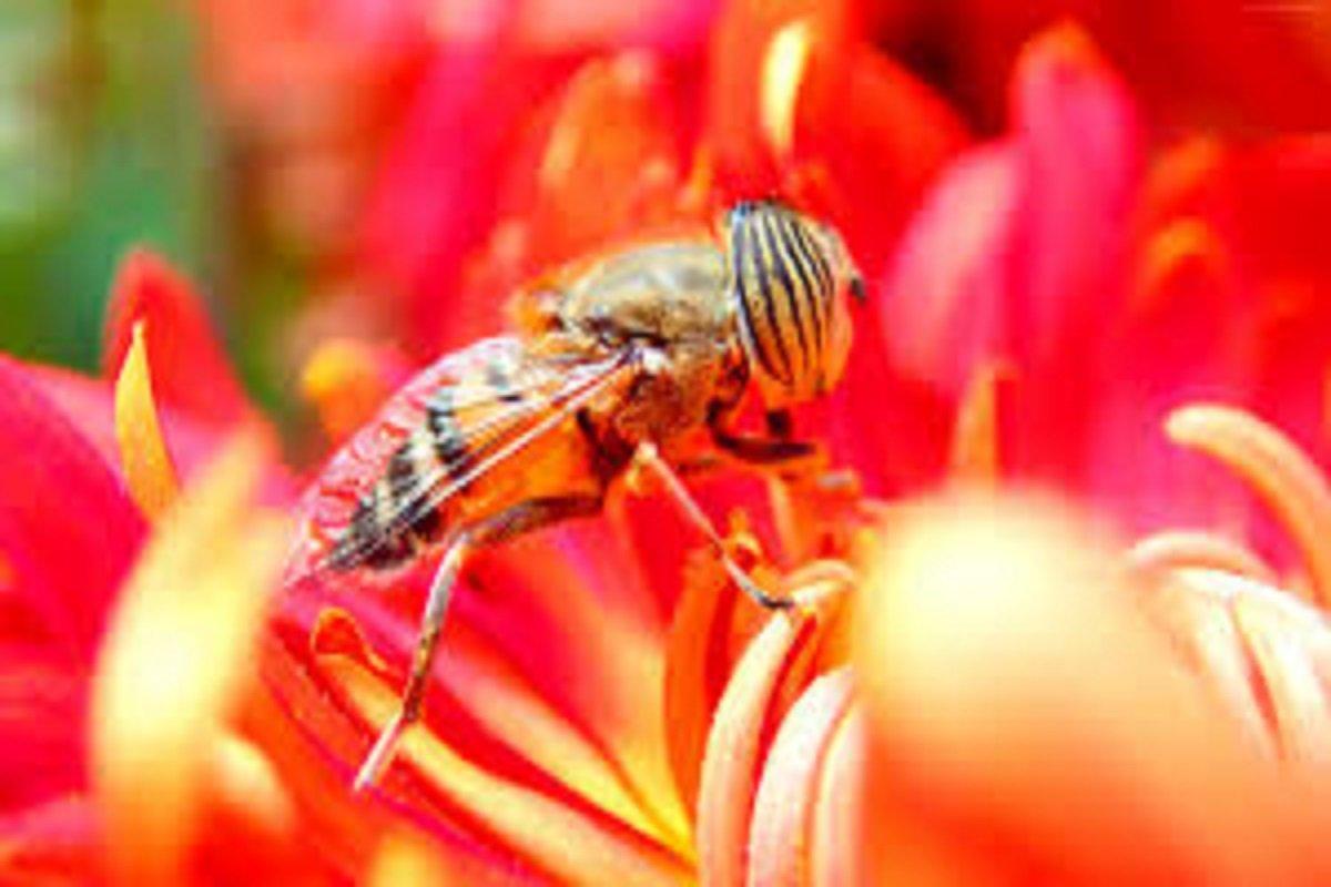 Yield-enhancing beekeeping-one day special breeding training!