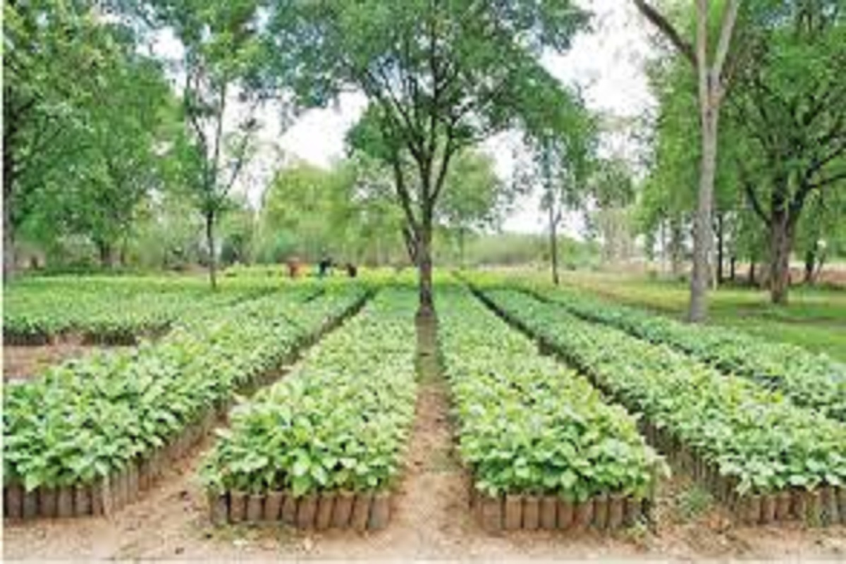 Sapling sale for Trichy farmers - Horticulture Department organized!