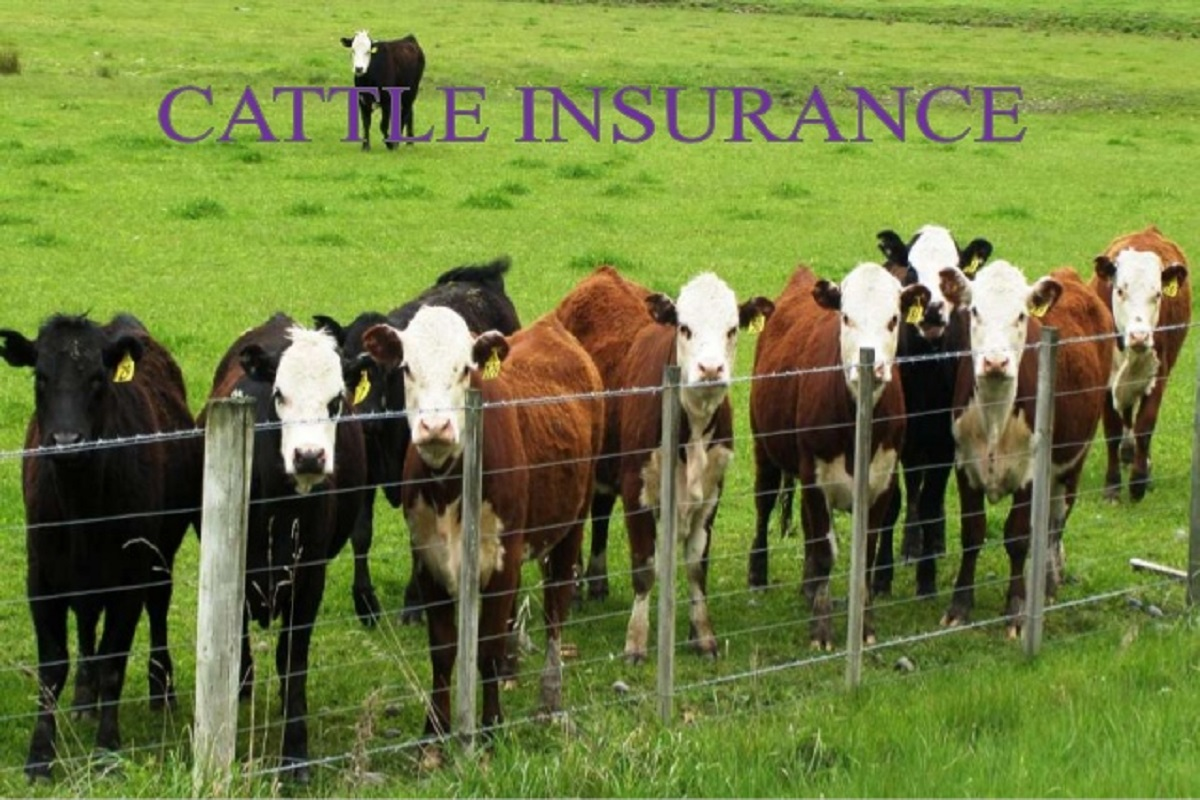 Insurance for cows with 70% subsidy - Welcome to the decision of the Government of Madhya Pradesh!